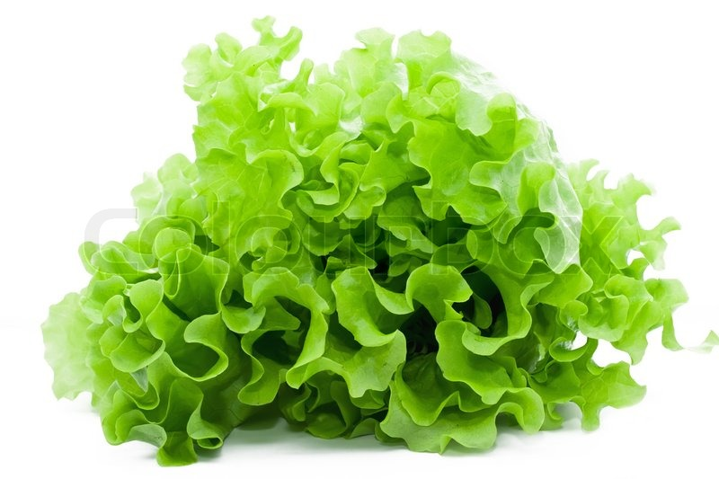 Fresh green Lettuce salad on white isolated background ...