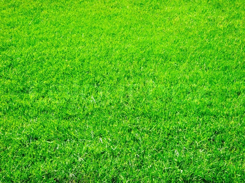 bright green grass great as a