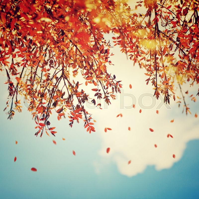 Beautiful vintage autumn background, autumnal tree border with falling down old leaves over blue cloudy sky, abstract natural background, nature at fall, stock photo