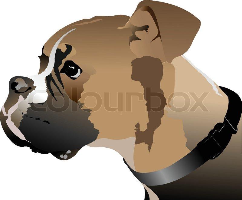 Boxer dog head. Vector illustration   Stock Vector   Colourbox