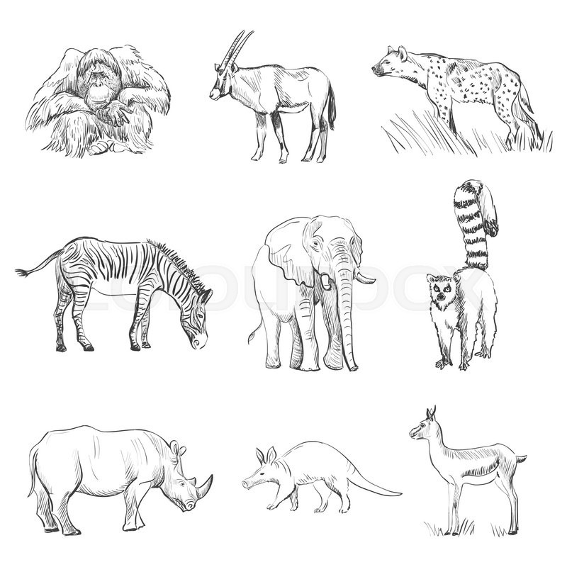 Zebra Character Design : Character design set of animals silhouettes orangutan