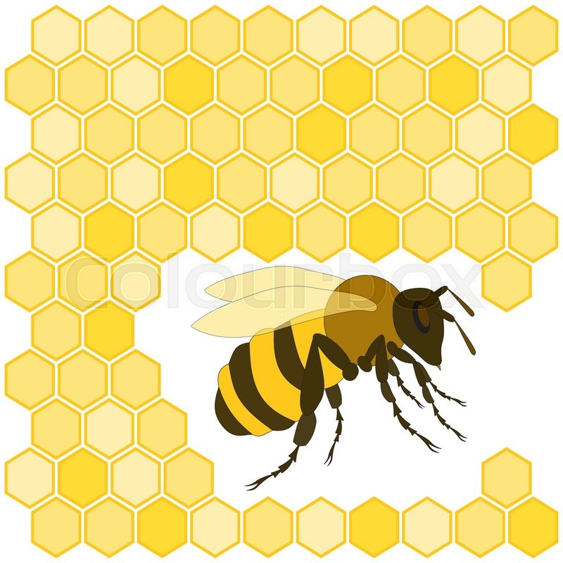Cute Hand Drawn Bee And Honeycomb On White Background Can Be Used For Cards Invitations Web Design Wallpaper Surface Textures More