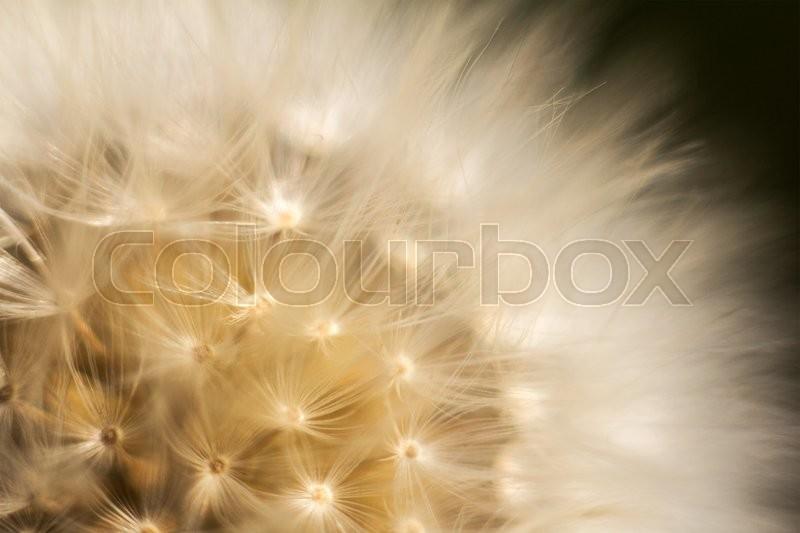 Stock image of \'flying, fragility, flower\'