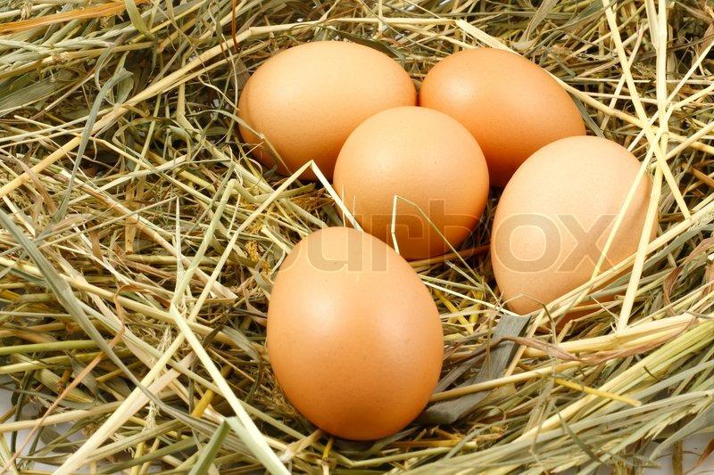 Как сделать кушаю яйцо - vetroarredoru