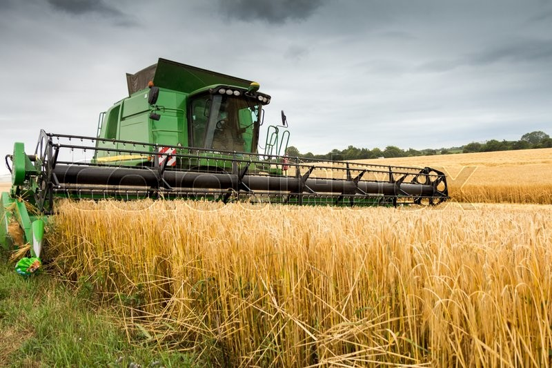 Combine harvester at work harvesting field of crop. Harvest season themes and other agriculture, stock photo