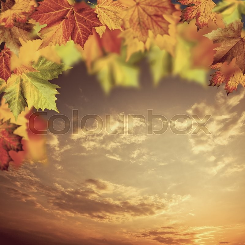 Neutral autumnal backgrounds with maple tree against beauty skies, stock photo