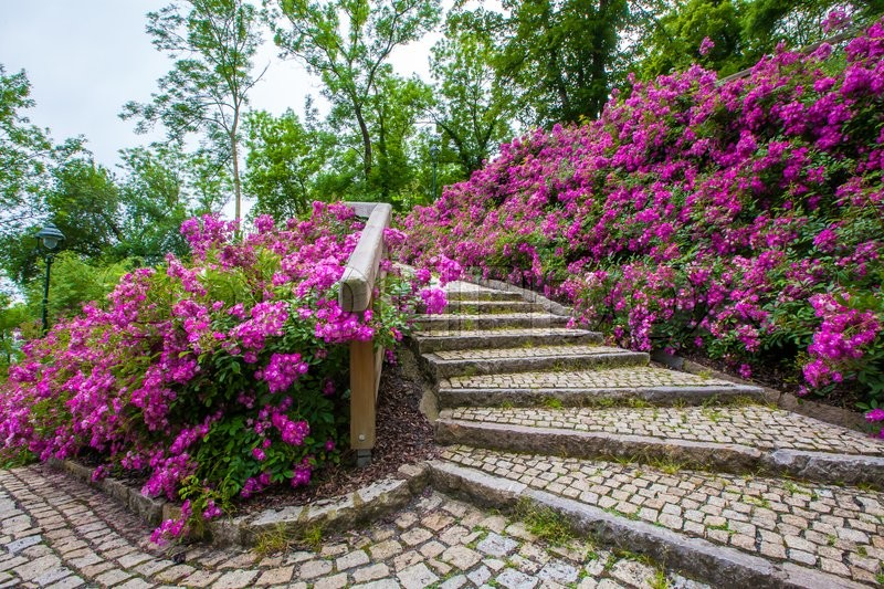 Tourism and sightseeing picturesque staircase covered in