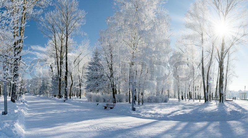 løg wiki smukke jule billeder