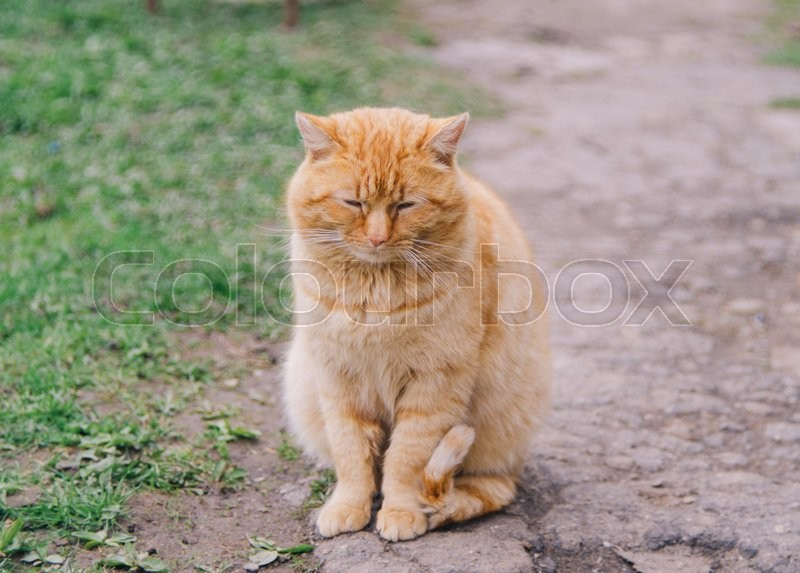 Ginger cat sitting on the ground in the village, stock photo