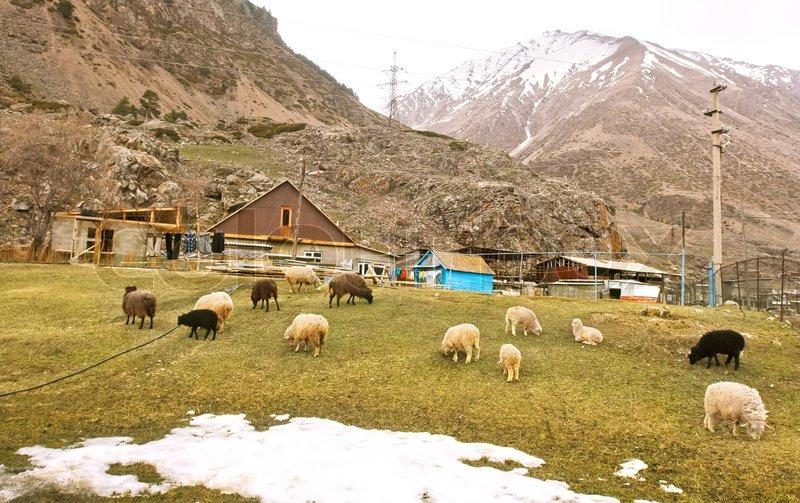 Beauty green farmland and small village in Caucasus