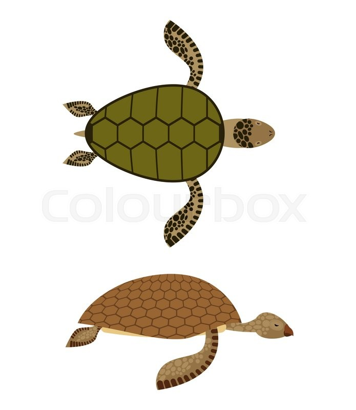 Set Water Turtle Side View And Top Stock Vector Colourbox