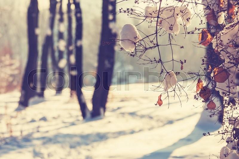 Winter scene, stock photo