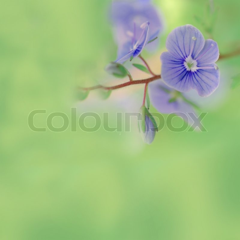 Meadow plant background: blue little flowers close up and green grass. Shallow DOF. Pastel toned, stock photo