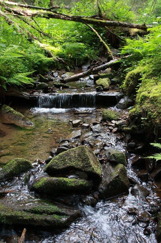 Stock foto af 'skov strøm af rent vand'