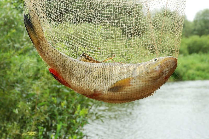 Catching fish in fishing net on a beautiful river for Fish catching net