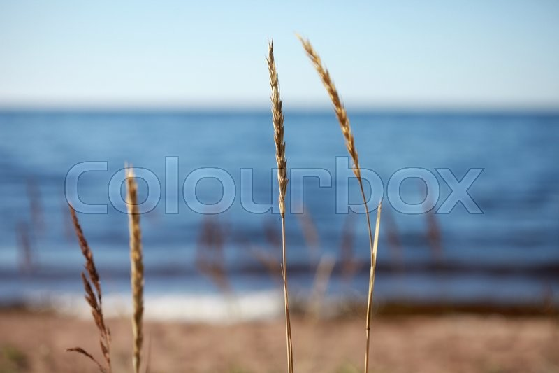 The sky, the sea and a wild beach. The focus on the foreground grass, stock photo
