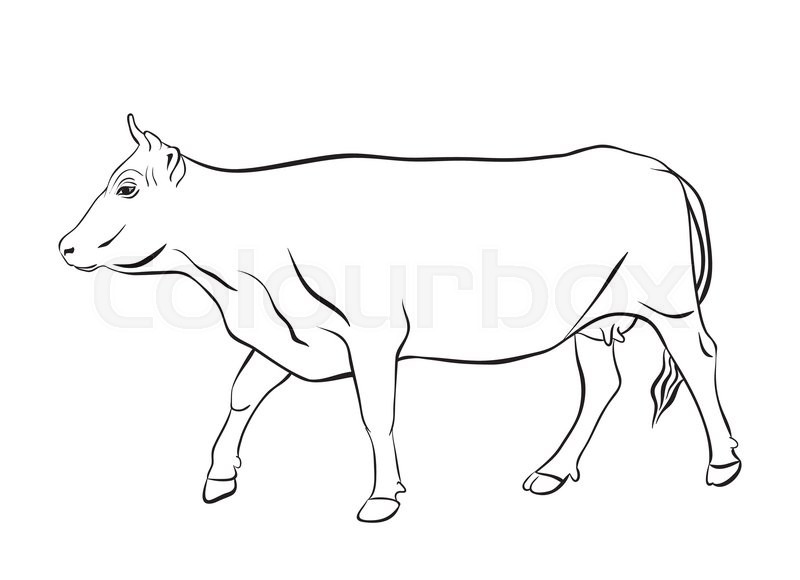 Line Drawing Cow : Cow ornament vector drawing with floral