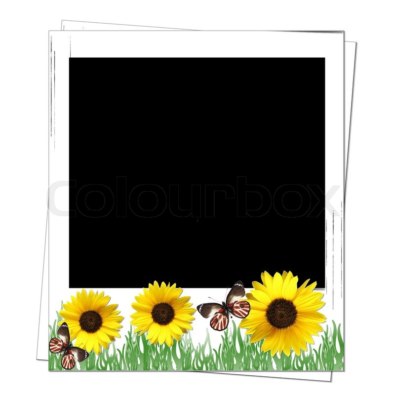 polaroid rahmen mit sonnenblumen mit platz fot text oder foto stockfoto colourbox. Black Bedroom Furniture Sets. Home Design Ideas