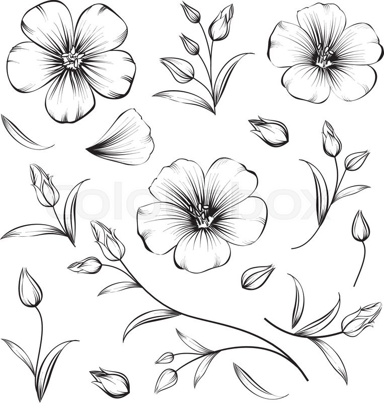 Collection of sakura flowers set cherry blossom bundle black collection of sakura flowers set cherry blossom bundle black flowers of sakura isolated over white flowers contours collection vector illustration mightylinksfo