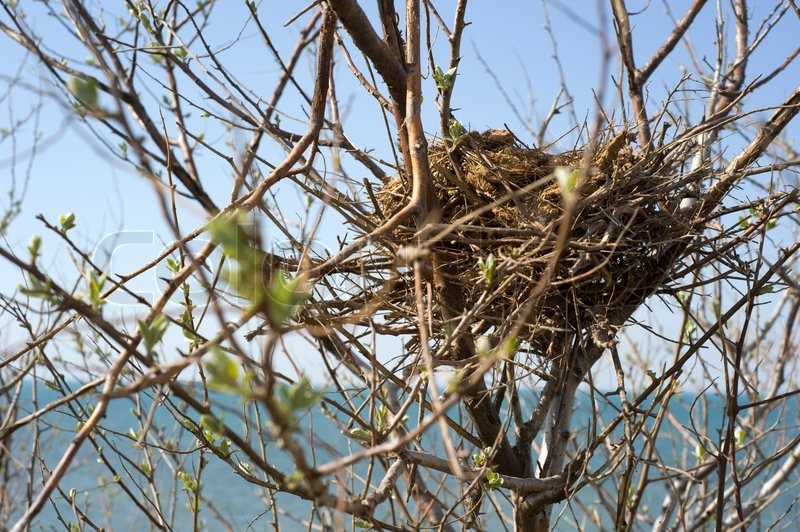 how to get permission to sell bird nest