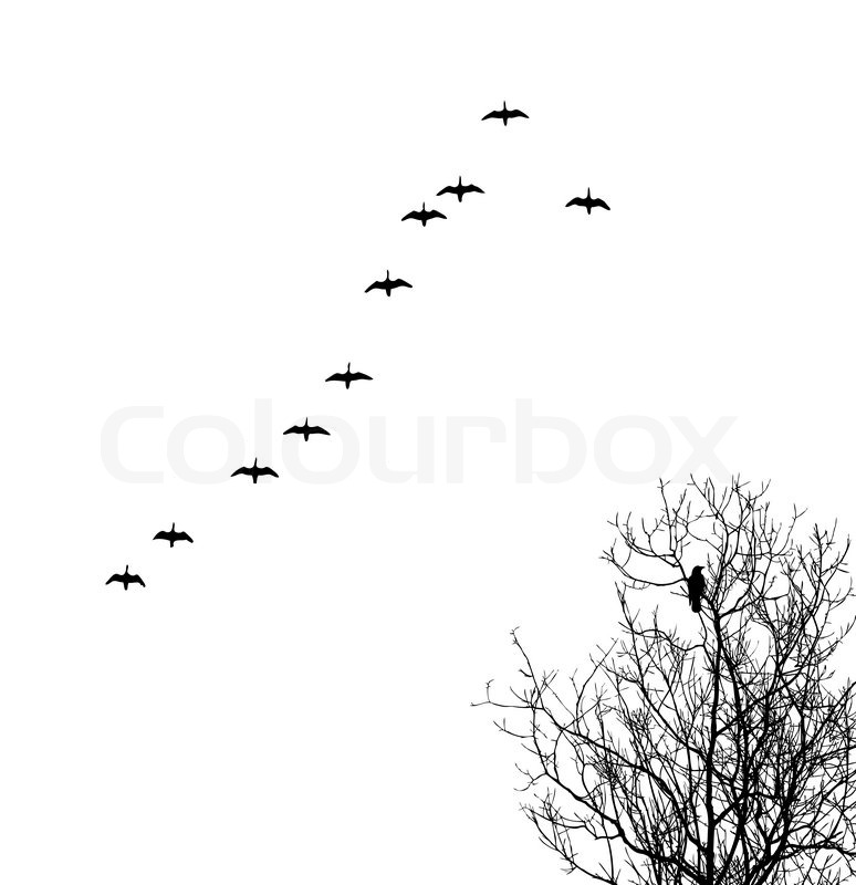 vector silhouette geese in sky and crow on tree stock