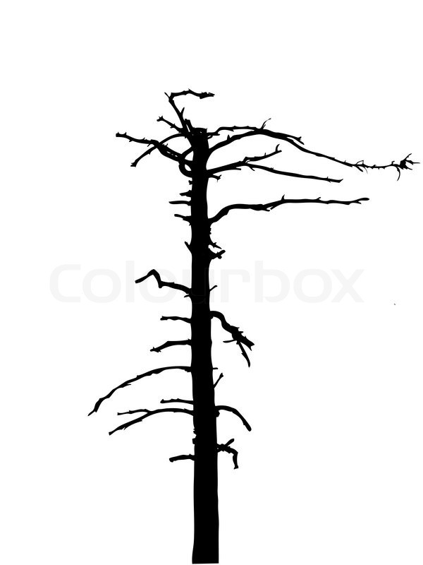 silhouette dry tree isolated on white