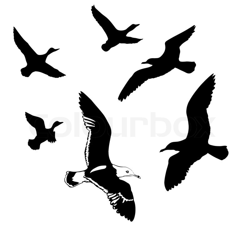 Vector Silhouettes Flying Birds On ...