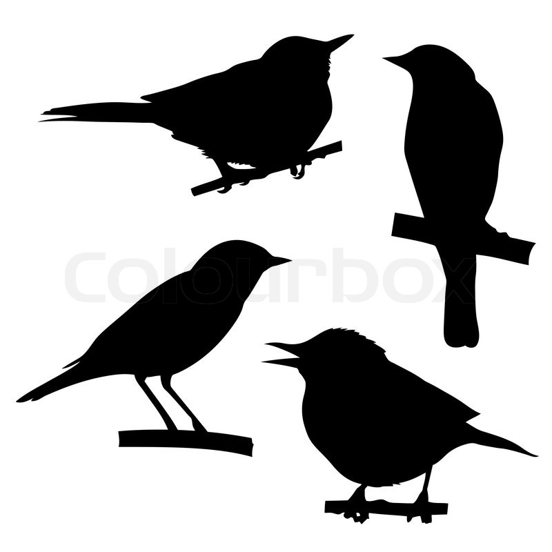 Vector silhouettes of the birds sitting on branch tree ...