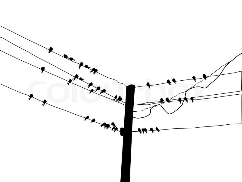 vector silhouette of the birds of the waxwings on wire stock vector silhouette migrating swallow reposing on electric wire