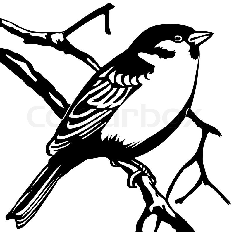 Vector Silhouette Sparrow On White Background Stock