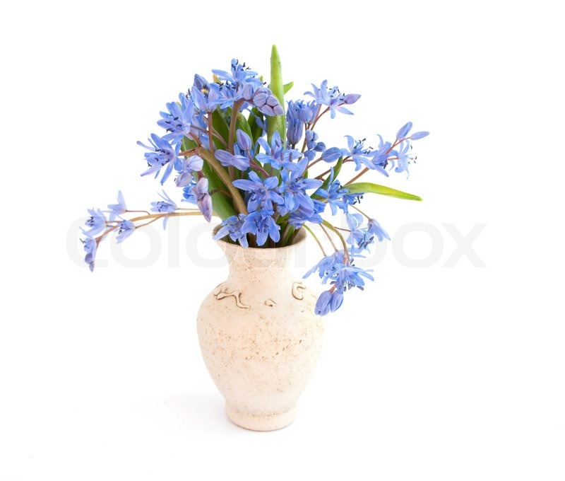 Blue Flowers In A Vase On A White Background Stock Photo