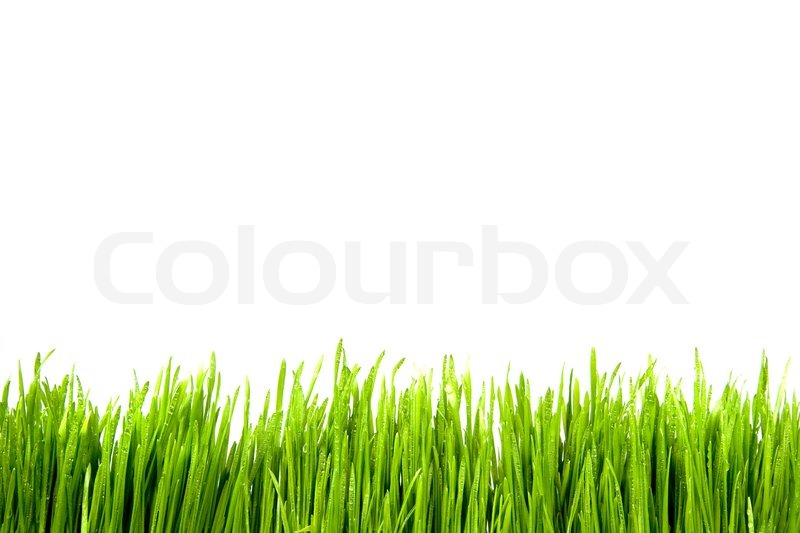 Green grass siolated against a white background | Stock Photo ...