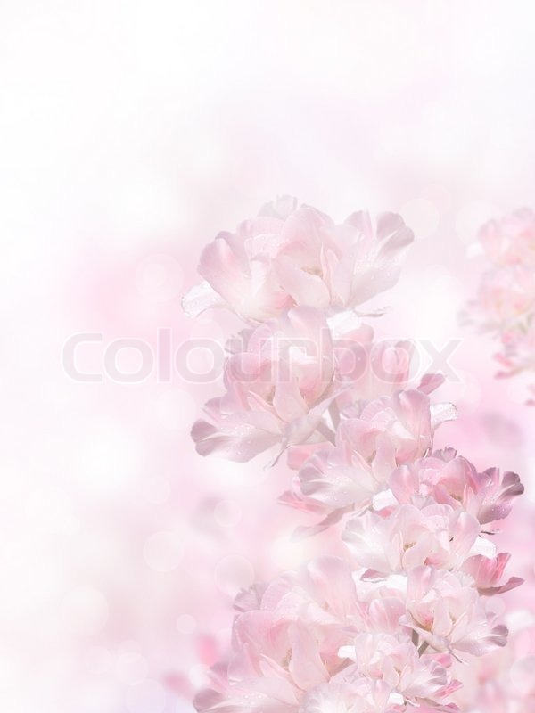 Pink spring flowers over the bokeh background, stock photo