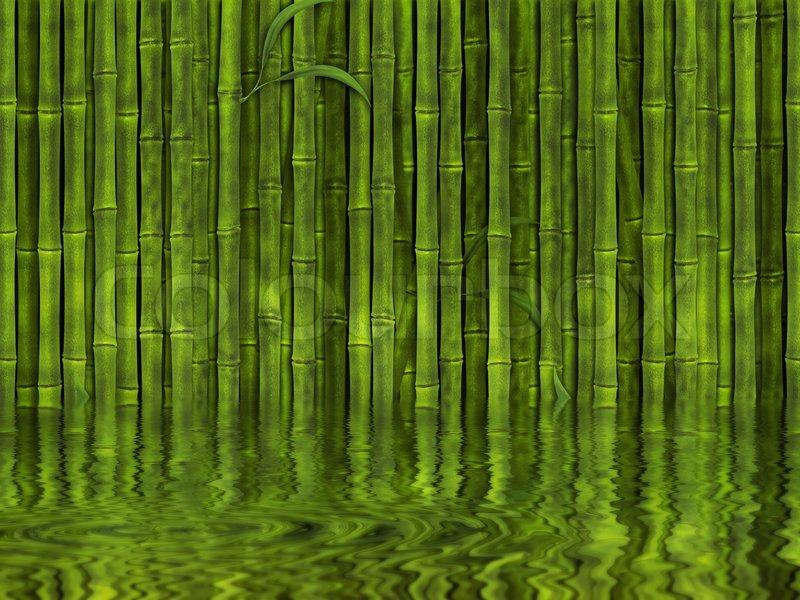 Пихта корейская Abies koreana  Хвойные деревья Буква П