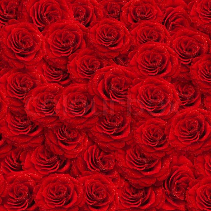 ganz in roses