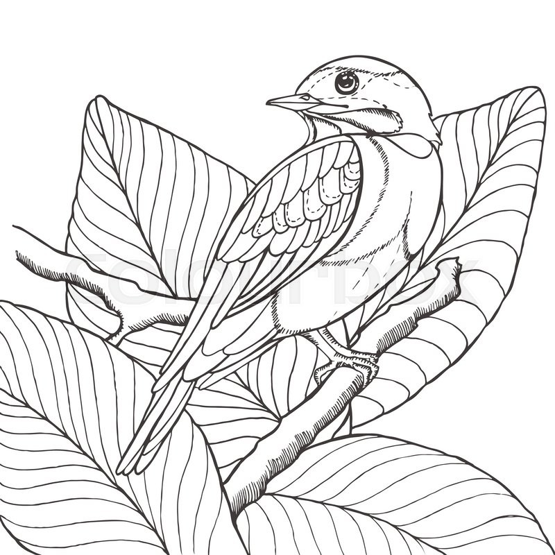 Contour Line Drawing Bird : Sketch of tropical bird sitting on branch in leaves