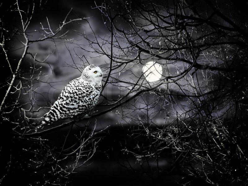 halloween night theme with moon and owl against cloudy dark sky