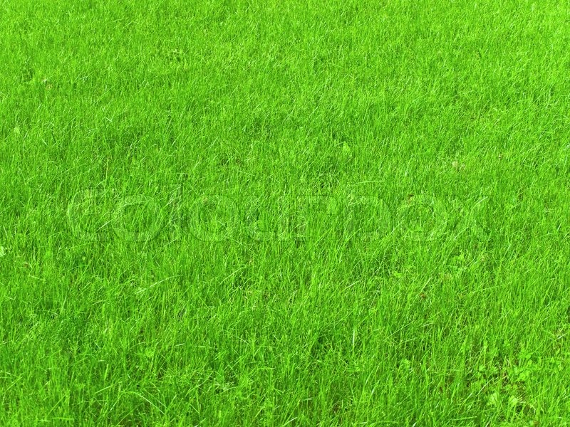 Cool Background Of Fresh Spring Green Grass