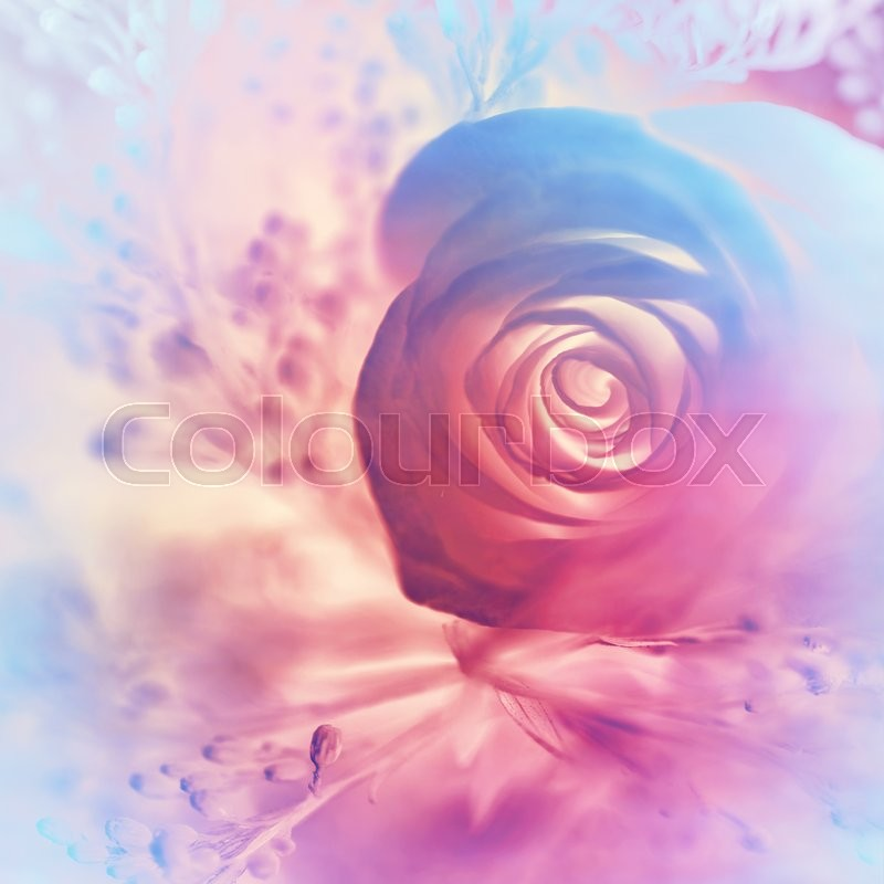 Dreamy Rose Background Abstract Pink And Purple Floral Wallpaper Soft Focus Image Nice Gentle Invitation For Wedding Day