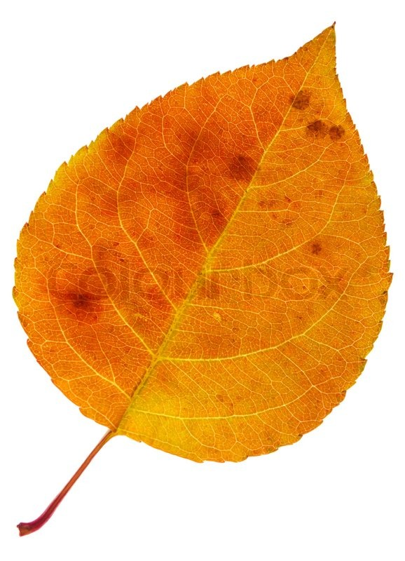 Autumn Orange Leaf With Dark Stains Isolated On A White