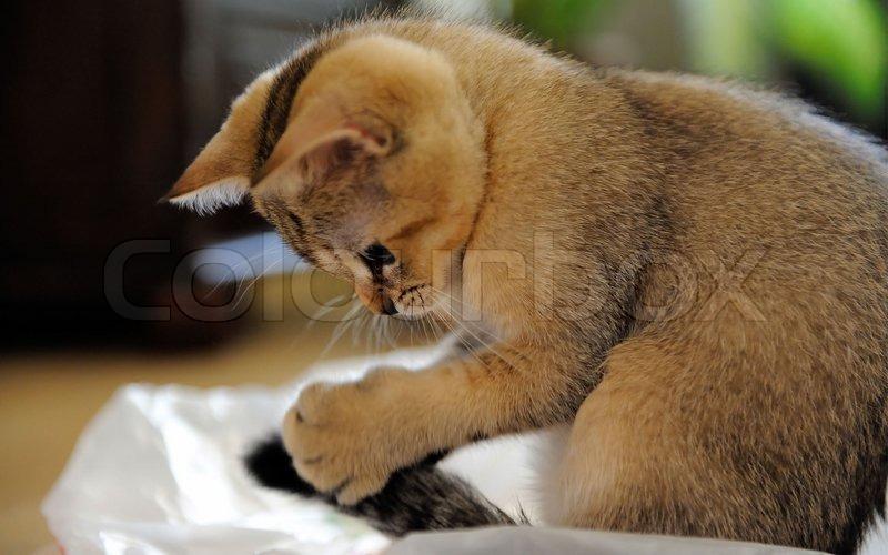Warum lecken einem Katzen die Hnde? - helpsterde