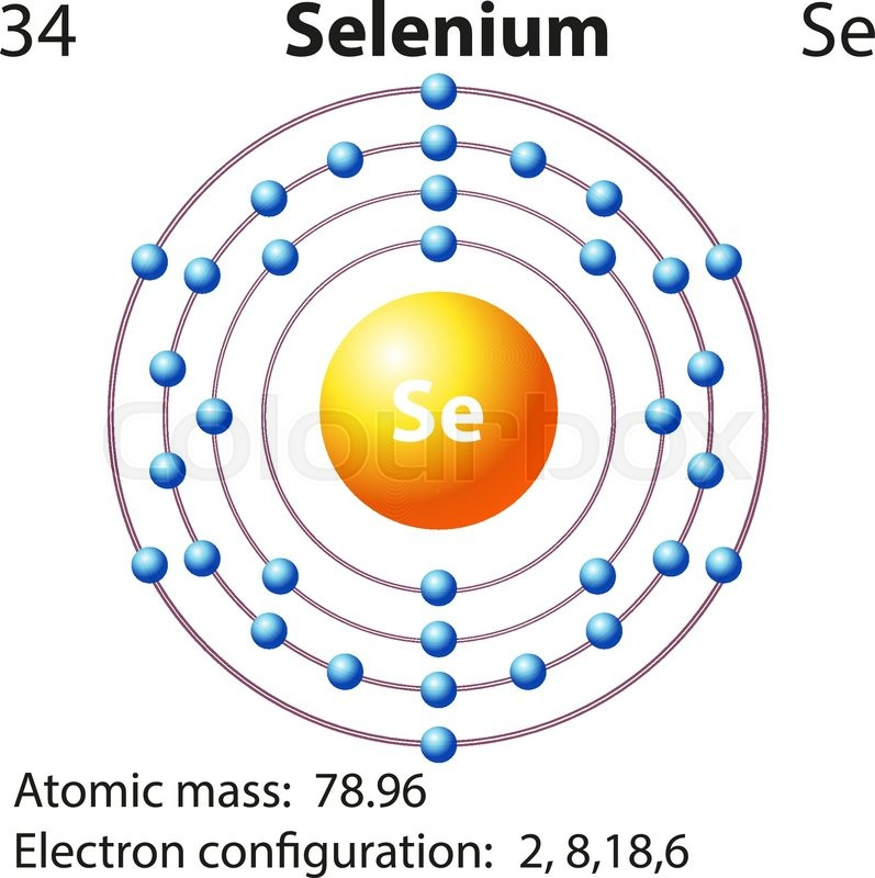 Symbol And Electron Diagram For Selenium Illustration Stock Vector