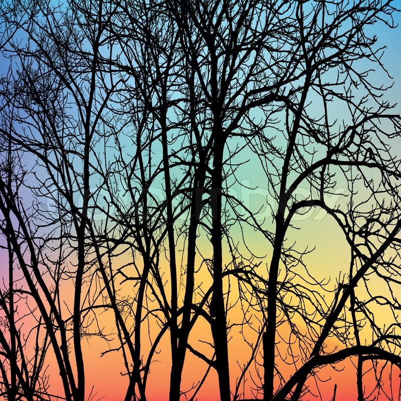 the branches of winter trees on sky background stock
