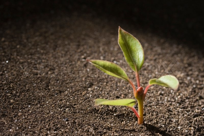 A young green seedling growing out of brown soil stock for Soil young s modulus