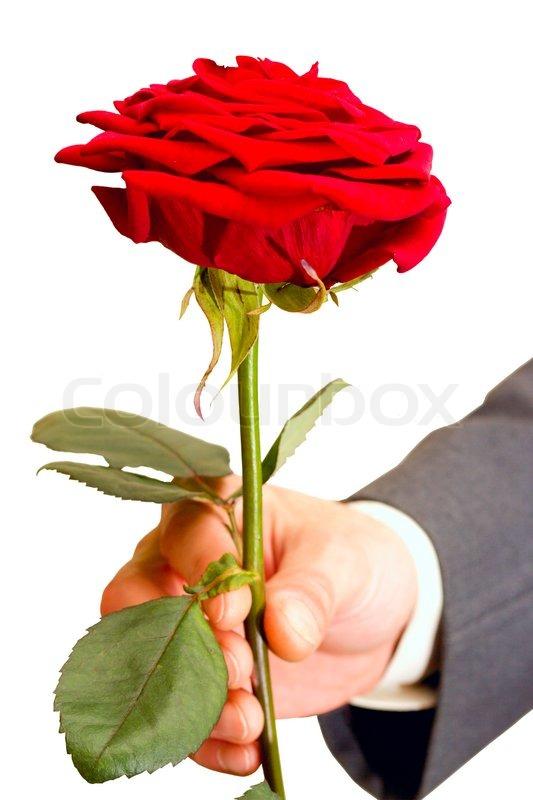 rote rosen am leben in der m nner hand stockfoto colourbox. Black Bedroom Furniture Sets. Home Design Ideas