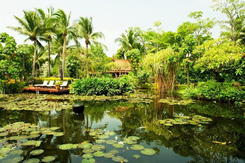 tropiske planter