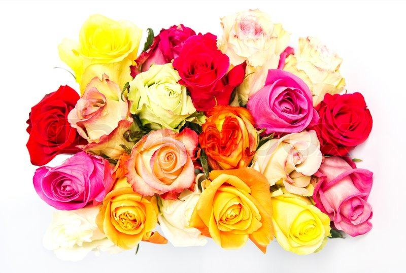 Colorful roses, beautiful flower bouquet on white | Stock Photo ...