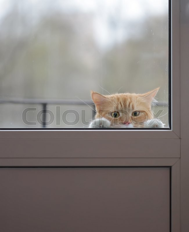 Red Cat With A Sad Look Outside The Window Wants To Go