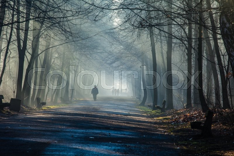 Road and sunbeams in strong fog in the forest, Poland. , stock photo