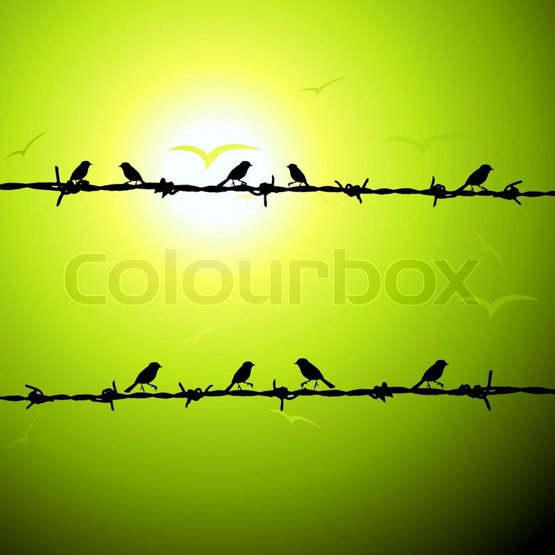 Birds On Wire Silhouette Stock Vector Colourbox